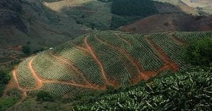 piantagioni origini - coffee plantations origins