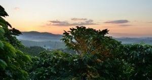 piantagioni origini - coffee plantations origins