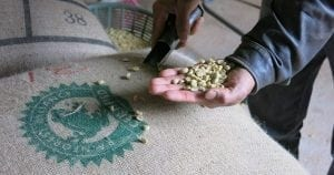 Rainforest Alliance Certified coffee beans: sustainable coffee - caffè sostenibile
